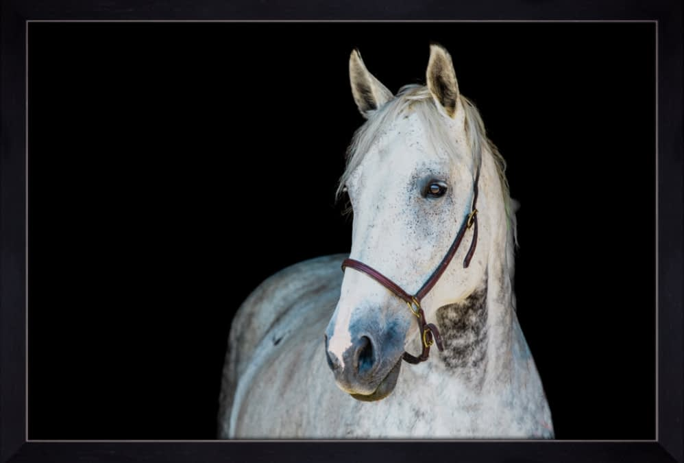 Fine Art Equine Portraits