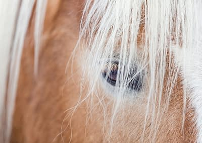 Horse_3342