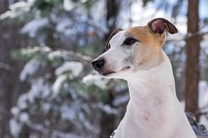 Pet Photography by Candra Schank Photography. Owen Sound, Grey and Bruce Pet Photographer.