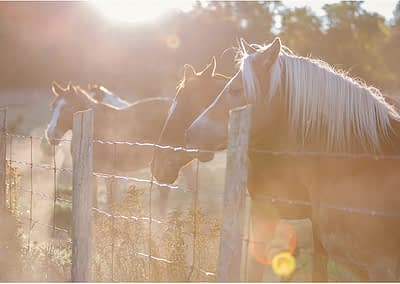 horse photography by candra schank