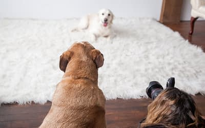 FAQs Part 1: Questions related to your dog and their pet photo session