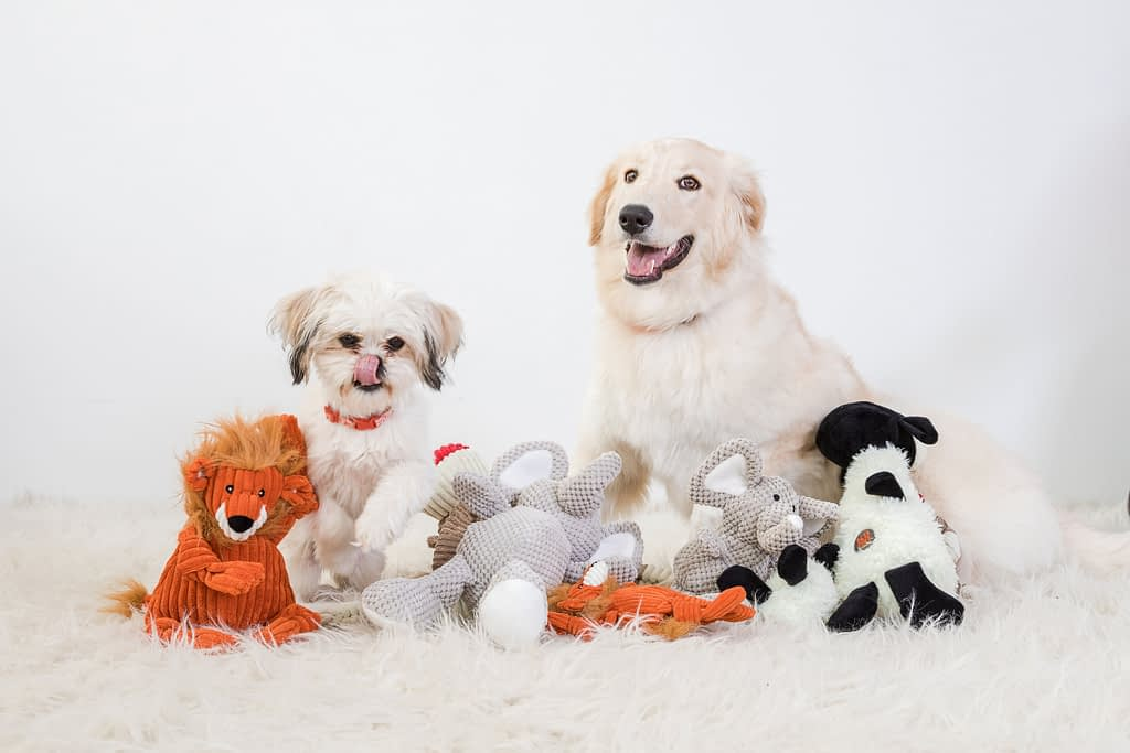 little shitzu puppy and a bernese lab puppy playing with their toys in the studio