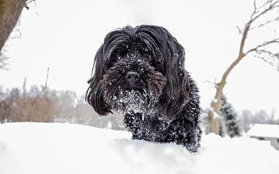 Ahhh…How do I photograph my black dog?