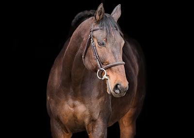 Horse_Portrait