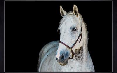Fine Art Equine Portraits / Owen Sound & Collingwood Equine Photographer