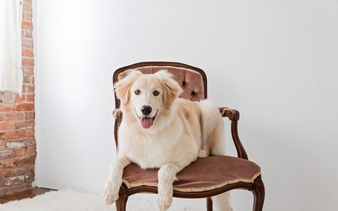 Fun Pet Sessions In The Studio / Owen Sound & Grey Bruce Pet Photographer