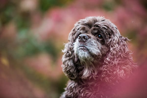 Pet Photography Session / Collingwood Arboretum / Collingwood Pet Photographer