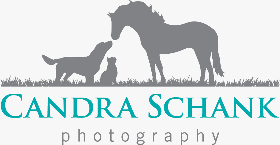Candra Schank Pet Photography
