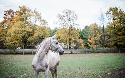 Fall family photos with the dogs & horses / Equine Photography / Markdale