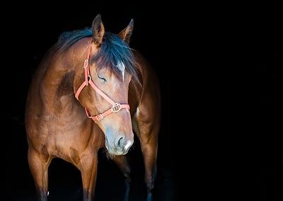 Fine Art Horse