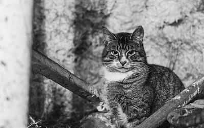 Farm Life / Candra Schank Photography / Owen Sound & Collingwood Pet & Equine Photographer