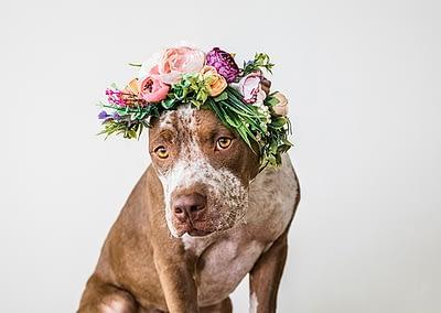 dogwearingflowergrown