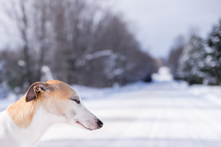 Pet Photography Session at -11 degree Celsius