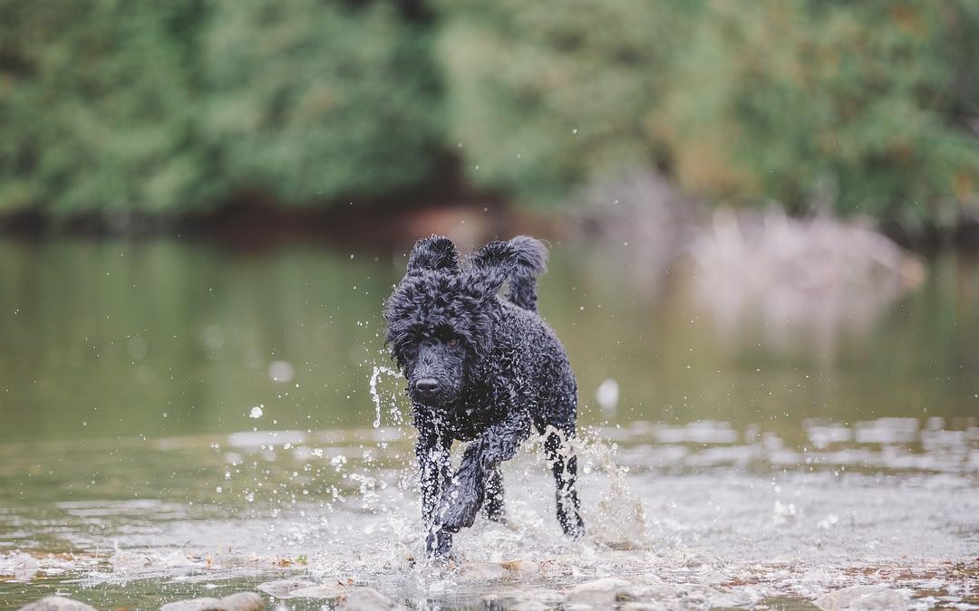 Wow, how do I photograph my dog running?
