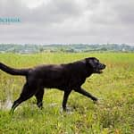Pet Photography by Candra Schank Photography in Owen Sound